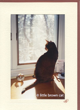 Quiet Contemplation Notecard