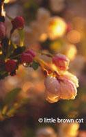 Flower Notecard 0506-2405