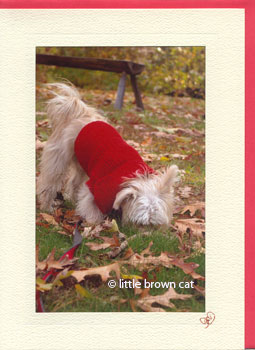 Red Sweater Dog Notecard