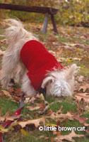 Dog Notecard 1006-3334