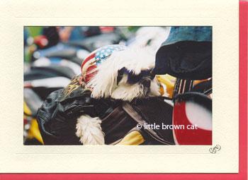 Biker Dog Notecard