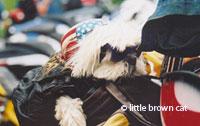 Dog Notecard 1011-23