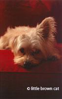 Dog Notecard 1206-4345