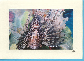 Lionfish Notecard