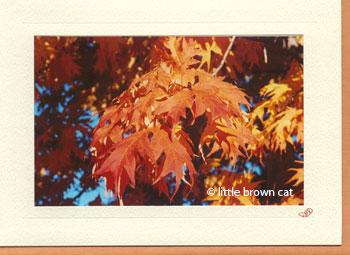 Autumn Leaves Notecard