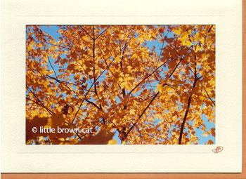 Autumn Tree Notecard