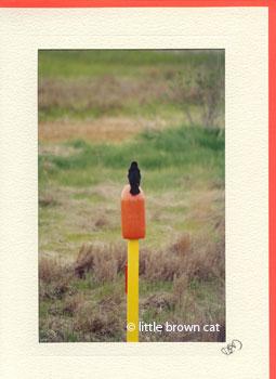 Lone Sentinel Notecard