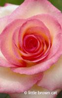Flower Notecard 52107-07
