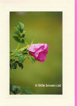 Sea Rose Notecard
