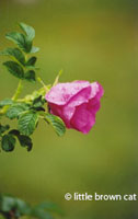Flower Notecard 5432-24