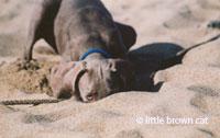 Dog Notecard 5507-03