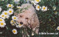 Dog Notecard 5508-18