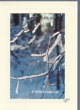 Forest Ice Notecard