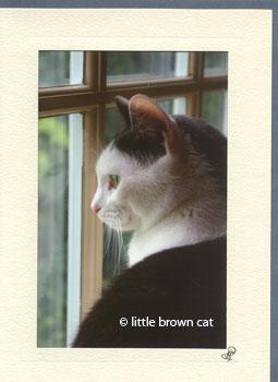 Arthur's Window Notecard