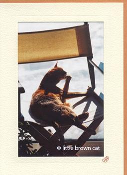 A Cat's Life Notecard