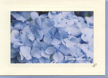 Hydrangea Notecard