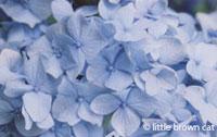 Flower Notecard 7999-14