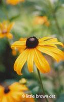 Flower Notecard 8228-09