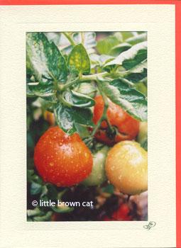 Fresh Harvest Notecard