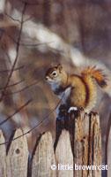Nature Notecard 877-04
