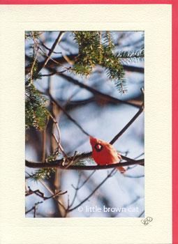 Curious Cardinal Notecard