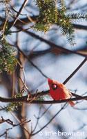 Nature Notecard 9284-15