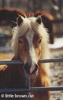 Horse Notecard H-03