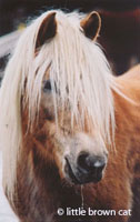 Horse Notecard H-112