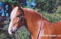 Horse Notecard H-124