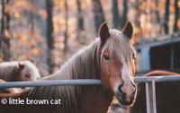 Horse Notecard H-126