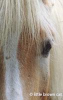Horse Notecard H-130