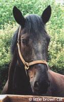 Horse Notecard H-136