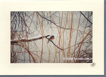 Early Bird Notecard