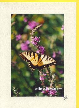 Swallowtail's Sweet Nectar Notecard