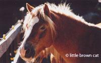 Horse Notecard H-78