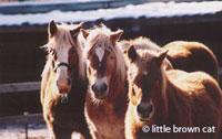 Horse Notecard H-93
