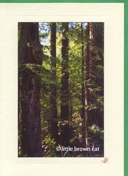 California Redwoods Notecard