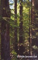 Potpourri Notecard Redwoods