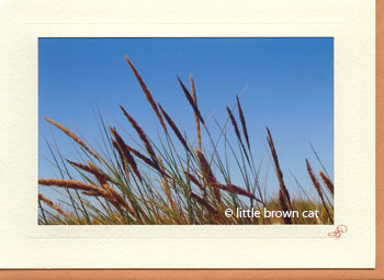 West Coast Dunes Notecard