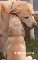 Dog Notecard Tucker-Kay-06