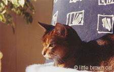 Grendel, my Abyssinian cat